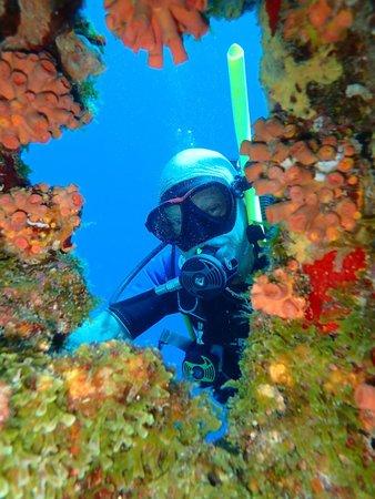 CURious2DIVE: Doorkijkje in het koraal op Klein Curacao