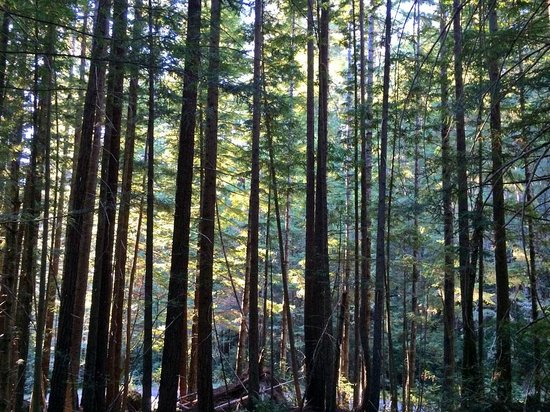 Lady Bird Johnson Grove: Forest trees