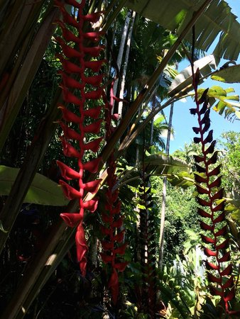 Hawaii Tropical Botanical Garden : Flowers, which the hummingbirds love