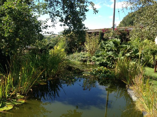 Yeoford, UK : The pond