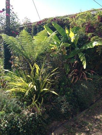 Yeoford, UK: Tropical garden