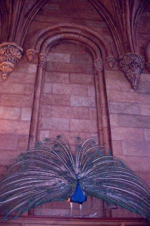 Edificio del Instituto Smithsoniano: Proud as a peacock