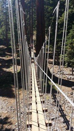 Tahoe Treetop Adventure Park : Long bridge