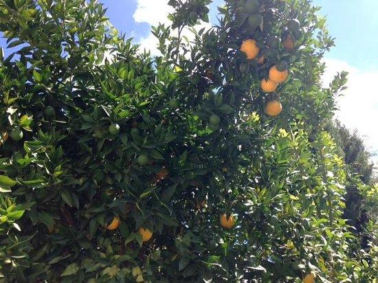 Hotel La Fuente De La Higuera: Fruit trees