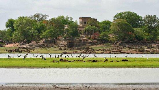 Nizamabad, India: Pocharam Wildlife Sanctuary ,Pocharam Lake  Visiting Season:  November to January is the best ti