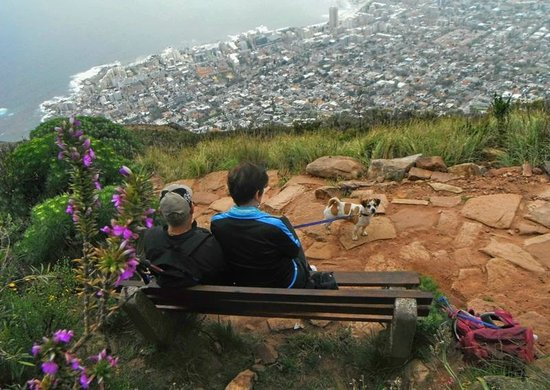 Half-Day Hiking and Trekking Tour on Table Mountain: Overlooking Cape Town City from Lion's Head