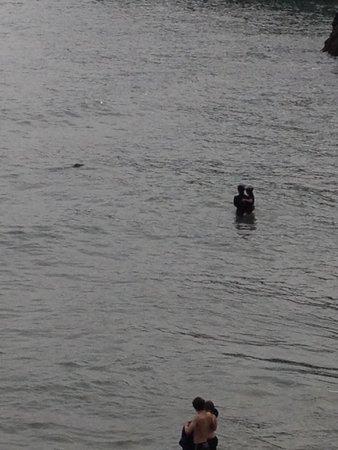 Wolohan's Silver Strand Caravan and Camping Park : Seal swimming close to shore
