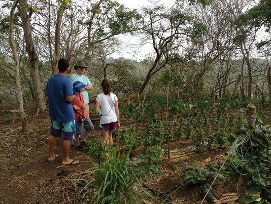 Finca Las Nubes: Touring the organic gardens at the farm