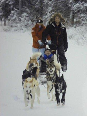 Banff Adventures: Paseo en el trineo de perros Husky