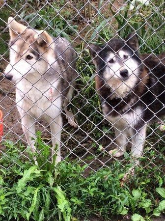 Wolf Sanctuary of PA: Wolf Sanctuary