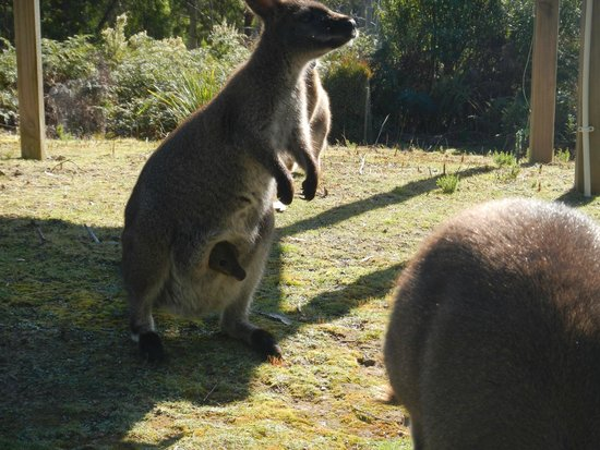 Lumera Chalets: The joey wanted to have a look too.