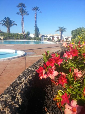 Royal Tenerife Country Club: Lost of flower