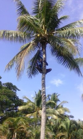 Anchorage Beach Resort: the lovely joe up the tree t