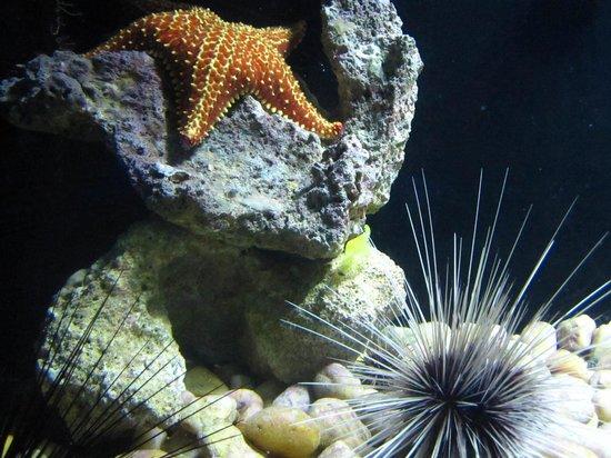 une 233 toile de mer et des oursins dans l aquarium picture of coral world park smith bay