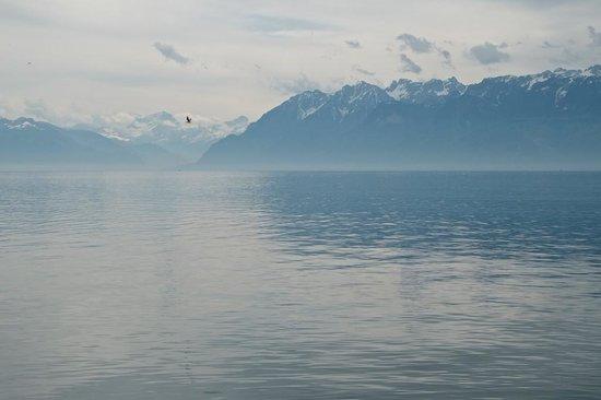 Jardin Botanique Lausanne: Lac de Genève on a misty morning