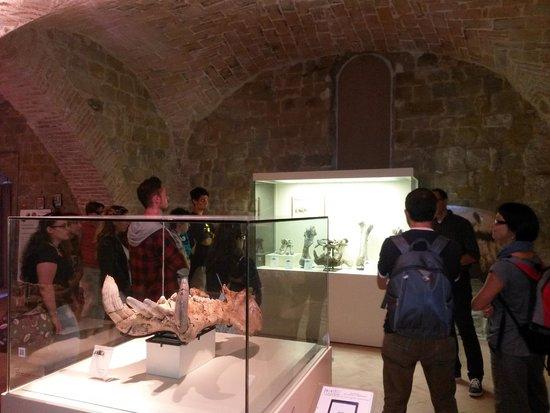 Polo museale Unicam: Resti fossili di vertrebati del Pleistocene provenienti dagli altipiani di Colfiorito.