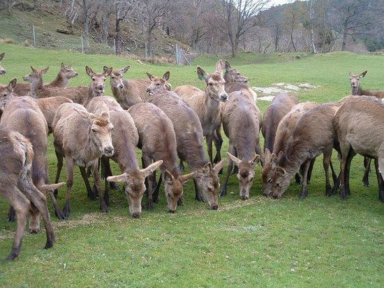 Norwegian Deer Centre: When the deers get feeded..so close we could enjoy them.