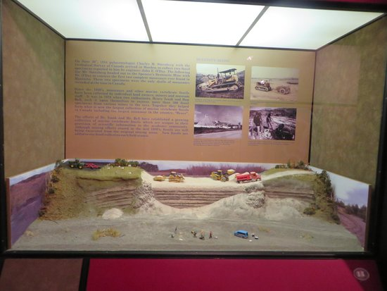 Canadian Fossil Discovery Centre: Display