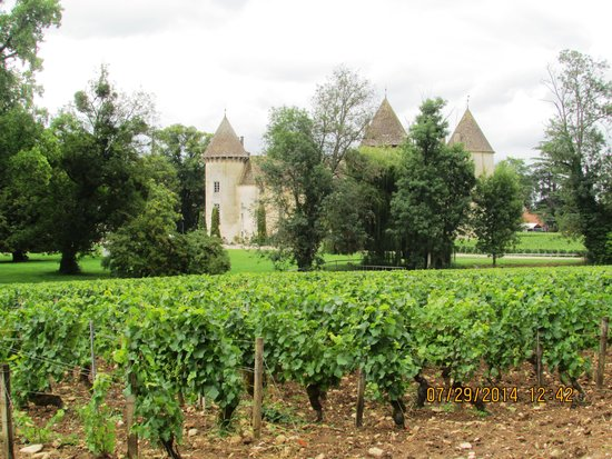 Château de Savigny-lès-Beaune: Vineyards of Chateau de Savigny