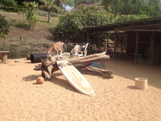 Surfing Goat Dairy: Here is a fun place to take photos.  The goats like to climb on the surfboards