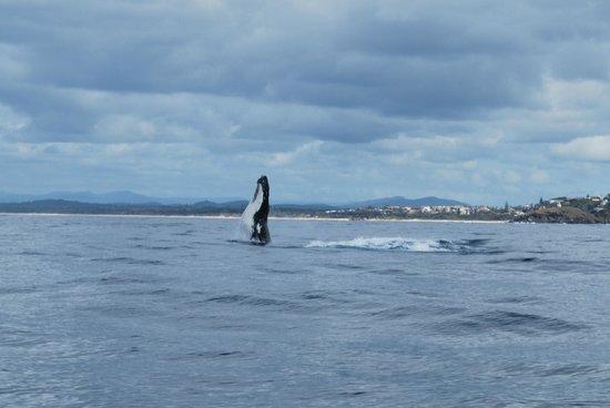 happy ending asian Port Macquarie