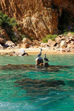 El Arco de Cabo San Lucas : Praia - Los Cabos.