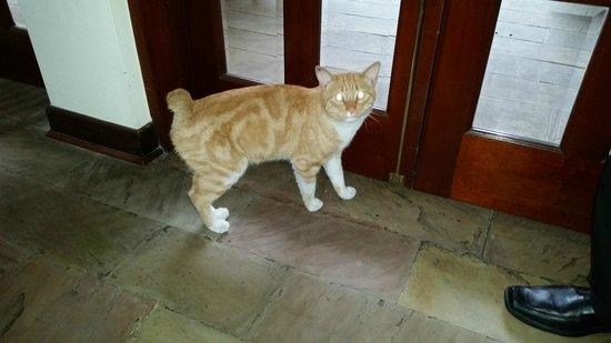 The Garden Hotel cat - who needs an alarm clock?