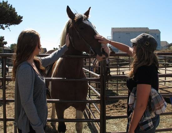 Green Acres Beach & Trail Rides: The horses are very friendly!