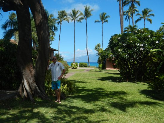 Maui Sands: Lots of space in paradise!