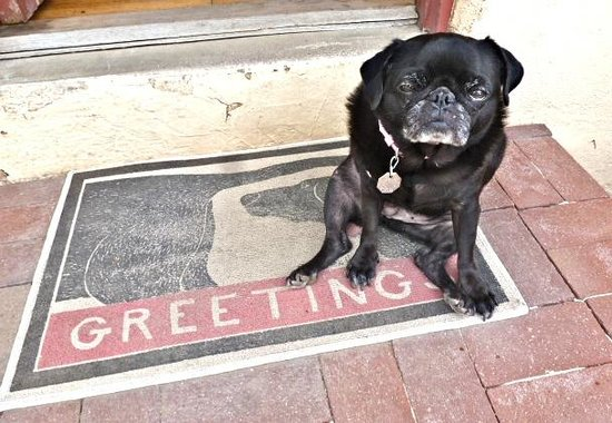 Chapelle Street Casitas : Pets are welcome