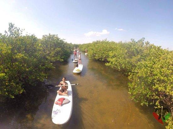 South Florida Paddle: mangrove trails