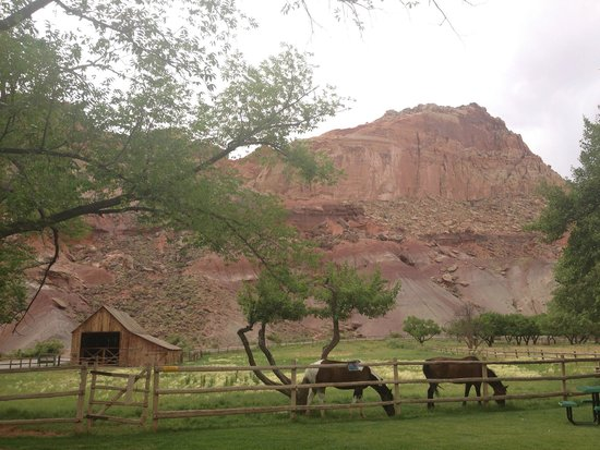 Fruita Campground: Lawns in front of Gifford House