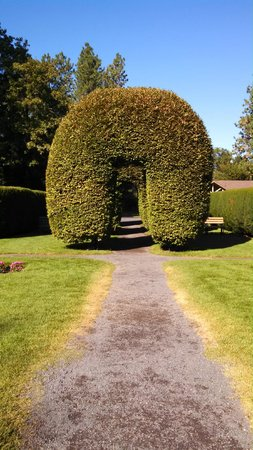 Manito Park: Rows of Arched Hedges