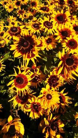 Parque Manito: Gorgeous Flowers