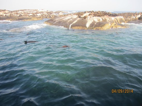PG Tops Travel and Tours - Day Tours: Brown fur seals at Seal island