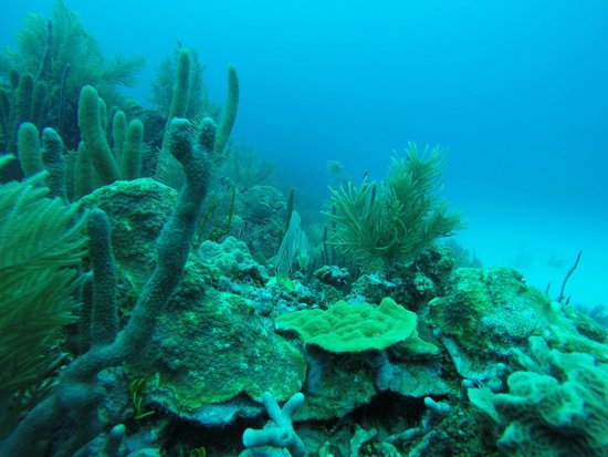 Sea Garden Dive Centre: Corales