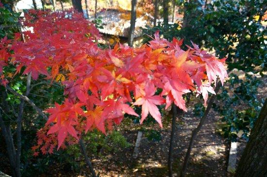 Takehisa Yumeji, Ikaho Museum : 紅葉の美しい庭園