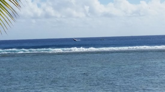 Magic Reef Bungalows: whale breaching on your door step