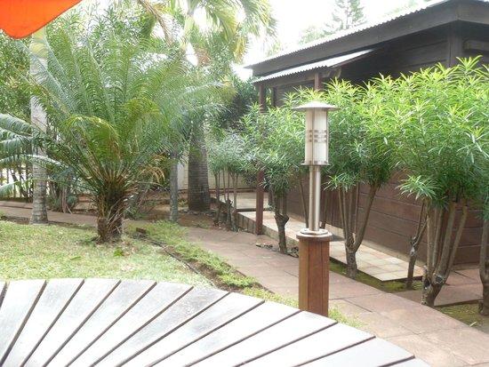 Baobab et Palmiers : le jardin