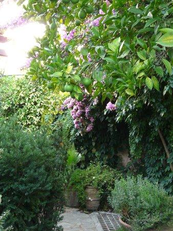 Jardin suspendu picture of the inn at the roman forum for Jardin suspendu
