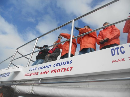 Dyer Island Cruises: Boat based viewing
