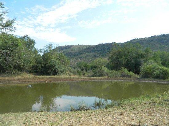 Kwa Maritane Bush Lodge : Water Hole