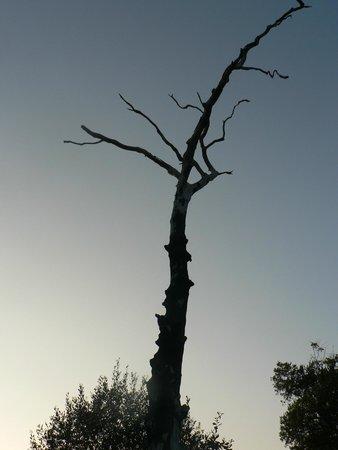 Camping la fontaine du hallate: L'abre mort du halatte