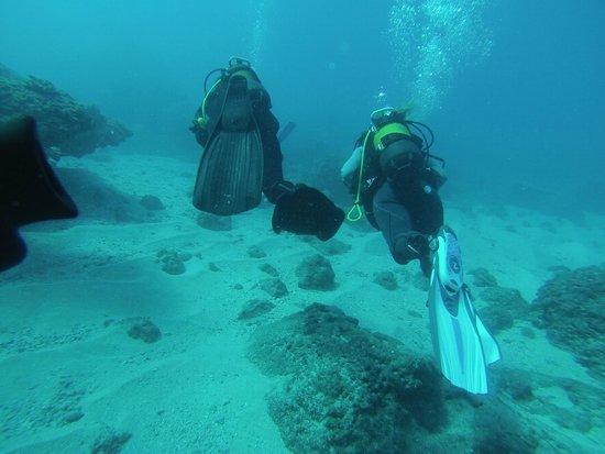 Bleu Marine Reunion: Promenade dans les fonds