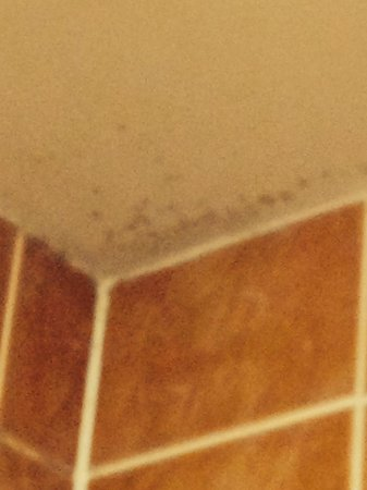 Best Western Welwyn Garden City Homestead Court Hotel: Mold in the shower
