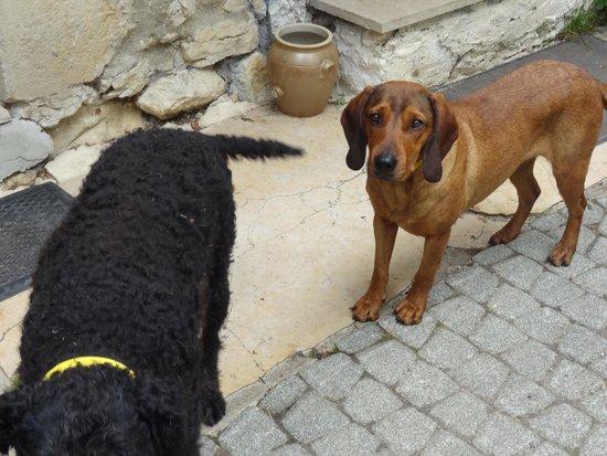 A La Crecia: La gentille chienne