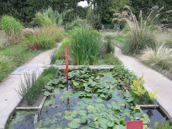 Jardin des Plantes : сад