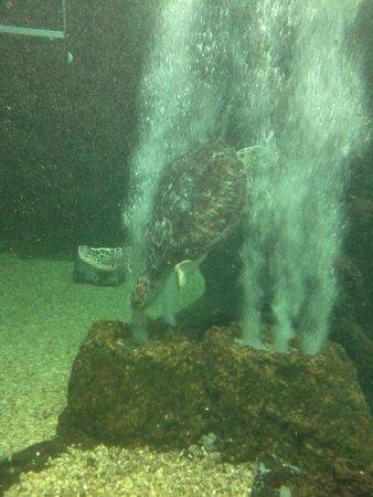 Aquario Natal: Tartaruga