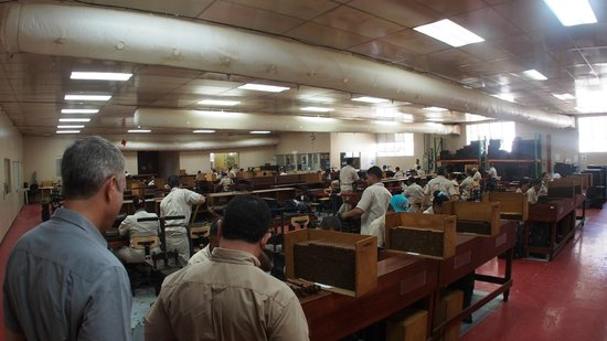 La Aurora Cigar Factory: The first room where they roll cigars
