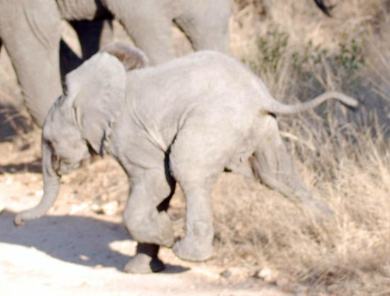 The Vuyani Safari Lodge : On Vuyani game drive